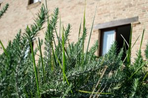 Assisium-agriturismo-esterno