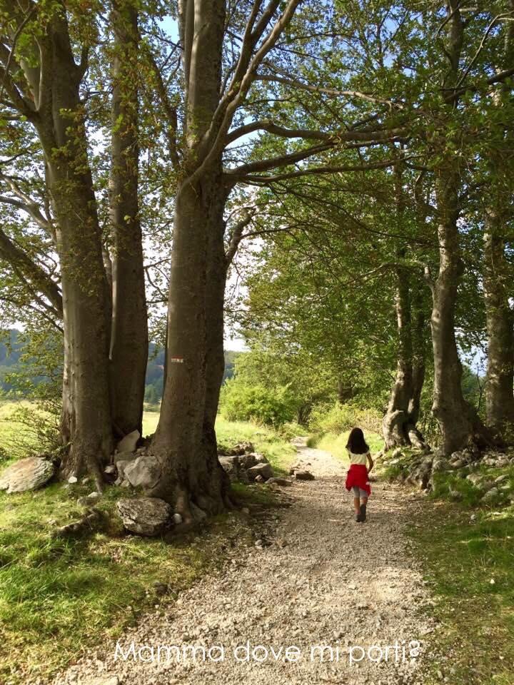 Sentiero Parco Giochi nel bosco Prati di Tivo