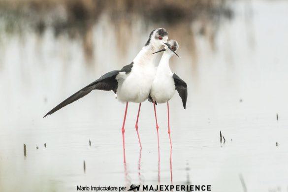 Birdwatching-Oasi-WWF-Lago-di-Serrannella-Sant-Eusanio-del-Sangro-CH