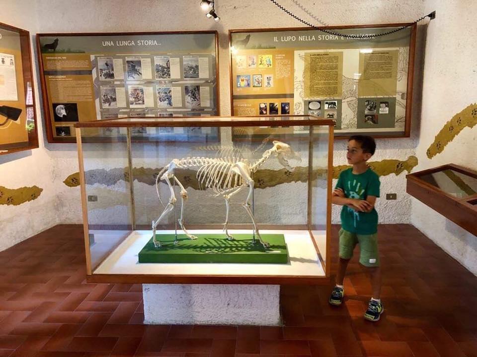 Musei in Abruzzo per bambini: Centro Visita e Area Faunistica del Lupo a Civitella Alfedena