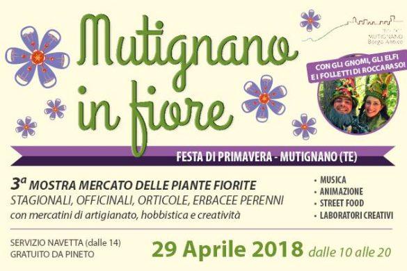 Mutignano-in-Fiore-Mutignano-Pineto-TE
