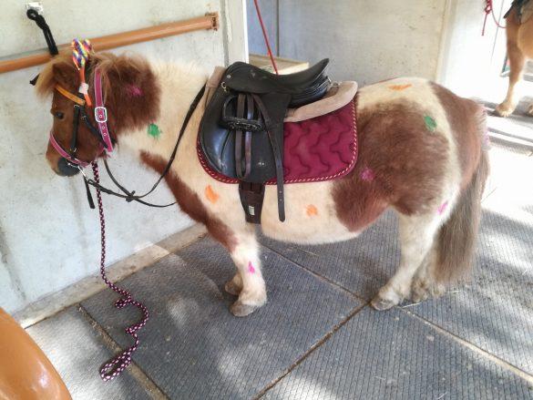 L'Arcobaleno Asd - Pianella - Pony