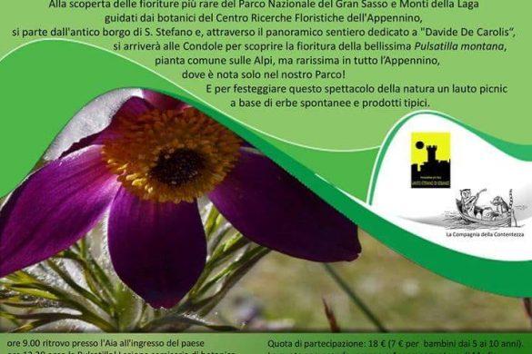 Sul-sentiero-della-Pulsatilla-Santo-Stefano-di-Sessanio-AQ