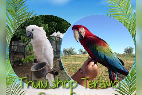 Tropical Party - Thun Shop - Teramo