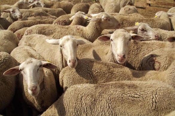 Un giorno da pastore - Campo Imperatore - L'Aquila