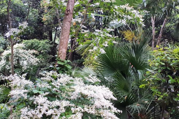 Caccia-al-Tesoro-Botanico-2019-Parco-Giardino-dei-Ligustri-Loreto-Aprutino-Pescara