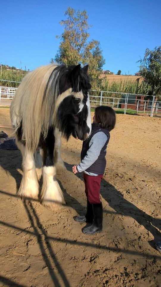 Avvicinamento al cavallo da Equanime, centro equestre di Roseto degli Abruzzi, in provincia di Teramo