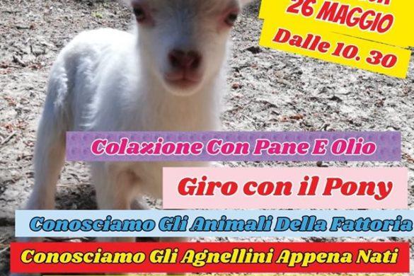 Mattina-in-Fattoria-LArcobaleno-Asd-Pianella-Pescara