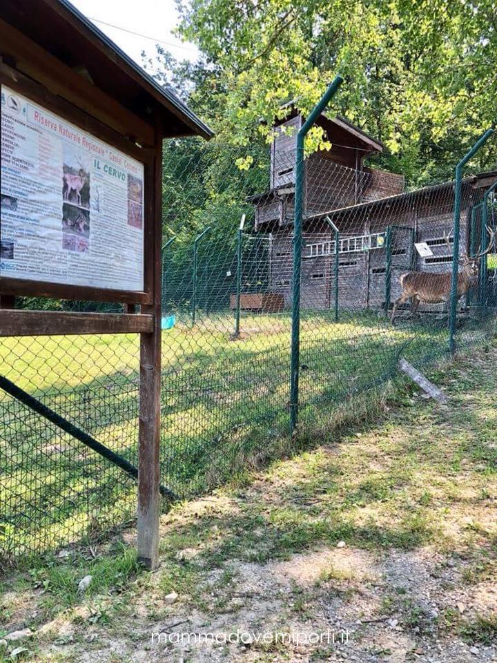 Area riservata al Cervo presso la Riserva Naturale Castel Cerreto
