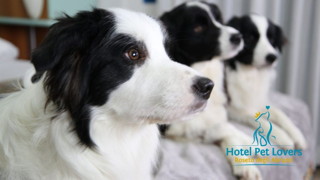 Hotel Marina i cani di Adriano: Ari Flo e Zoe