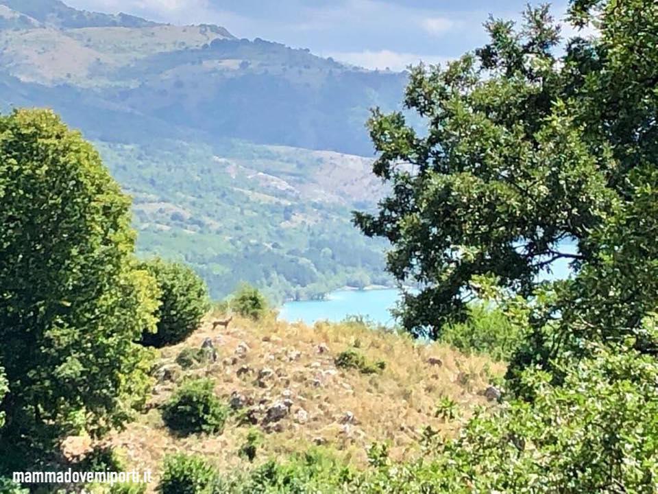 Area Faunistica del Lupo a Civitella Alfedena