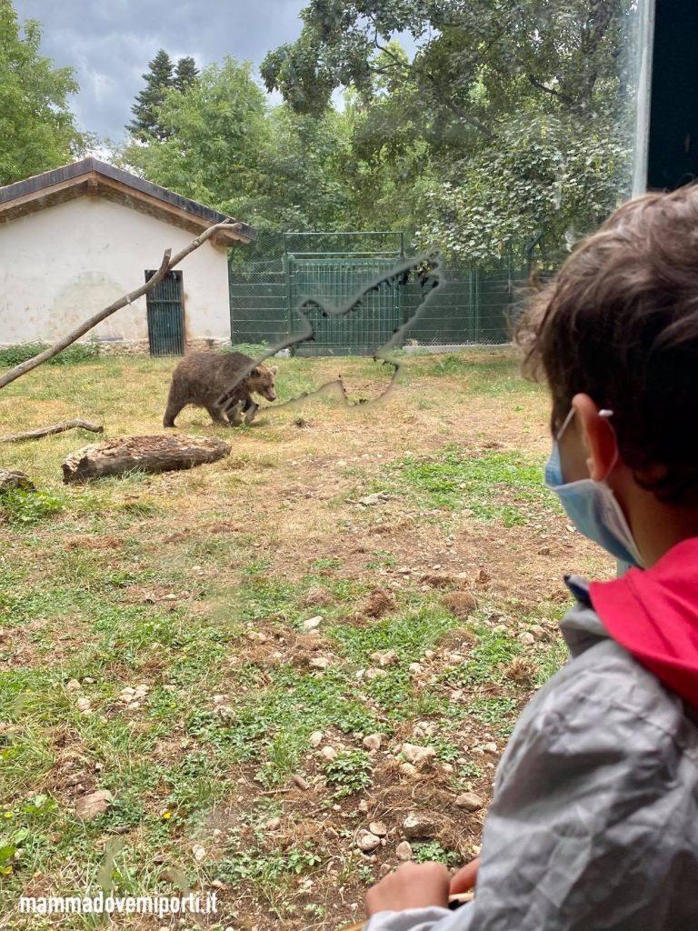 Dove vedere gli orsi in Abruzzo-Centro Visita Natura Pescasseroli