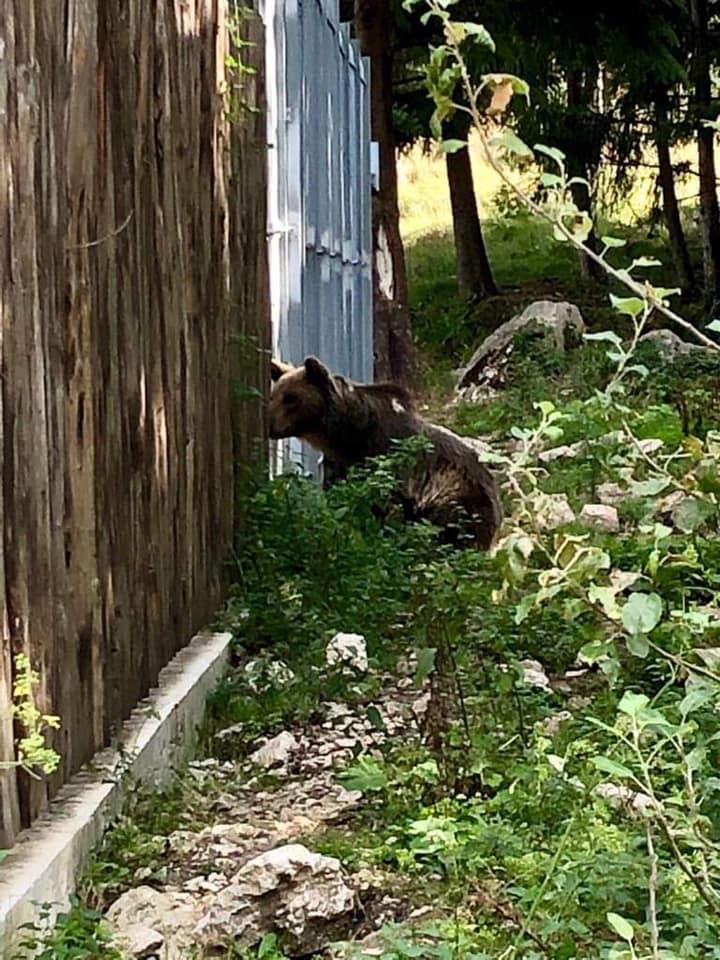 Dove vedere gli orsi in Abruzzo-Museo e area faunistica Orso Palena