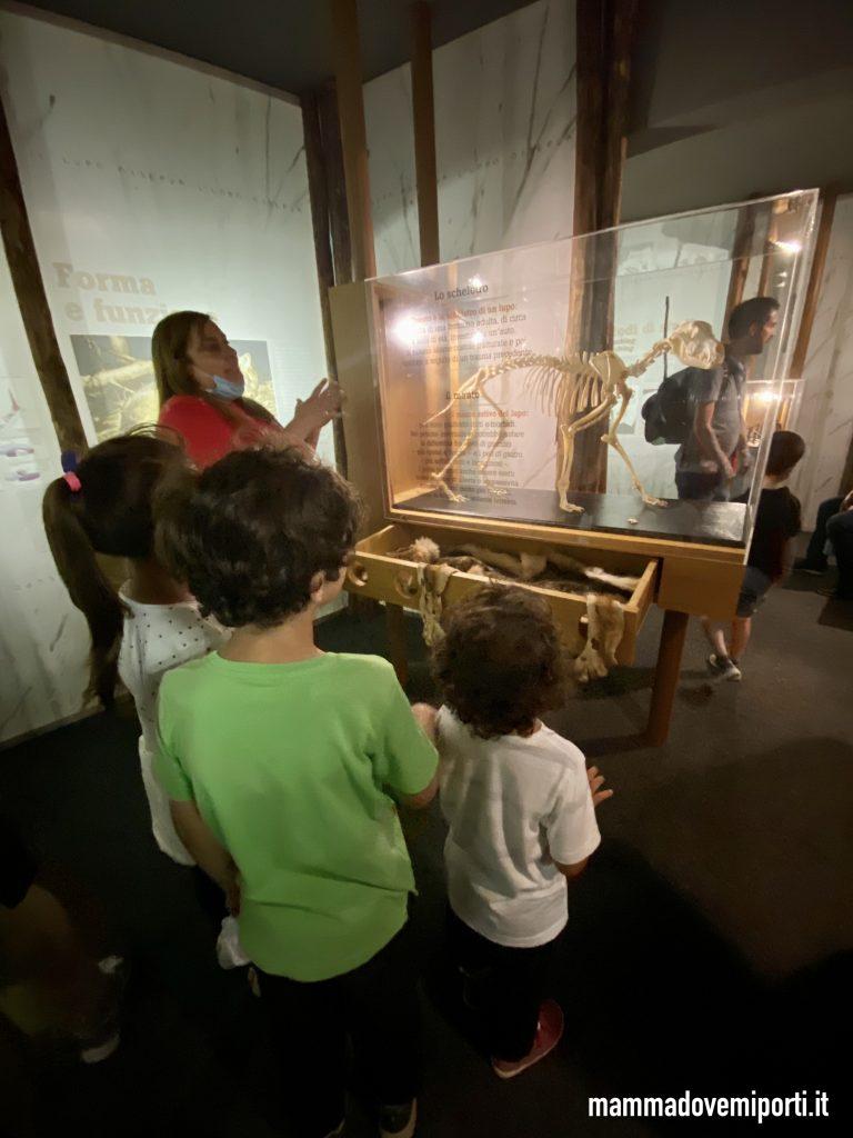Museo del Lupo di Arsita scheletro di lupo