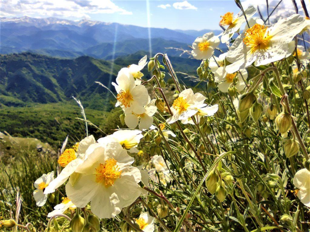 Fiori della Montagna dei Fiori a San Giacomo