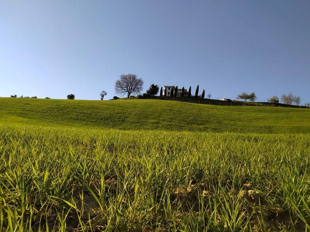 Il verde intorno a Casamè