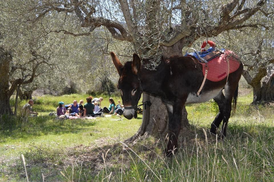 Picnic tra gli ulivi di Fattoria Valle Magica e gli asinelli di Gira e Rigira