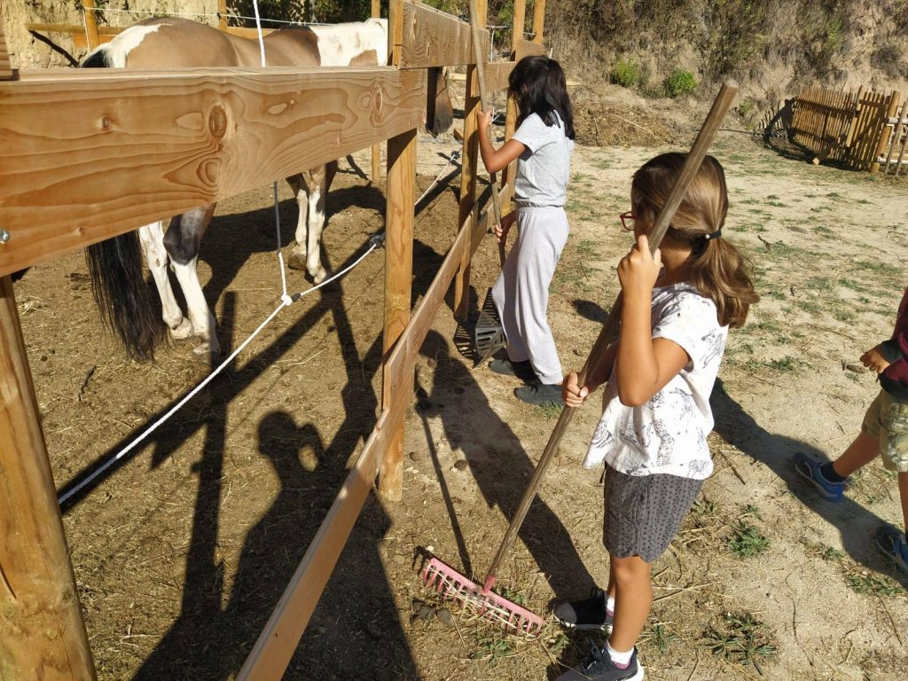 Si accudiscono gli animali da Radici Country House di Pescara