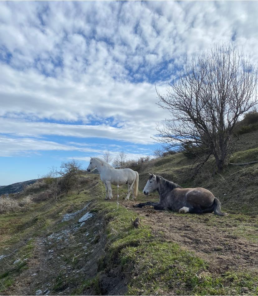 Cavalli dell'Azienda Agricola Rachele Intini