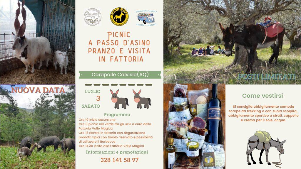Picnic a passo d'asino con pranzo e visita in fattoria