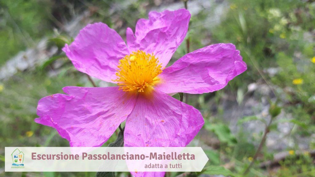 Escursione Passolanciano-Maielletta