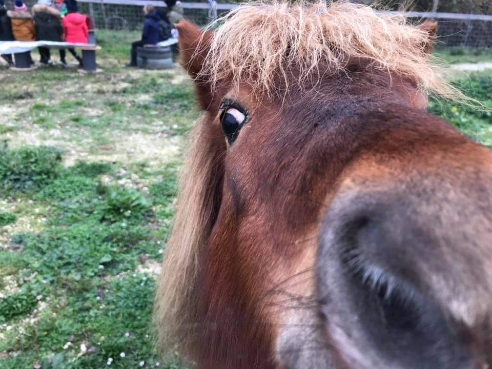 Pony di Pony Rangers