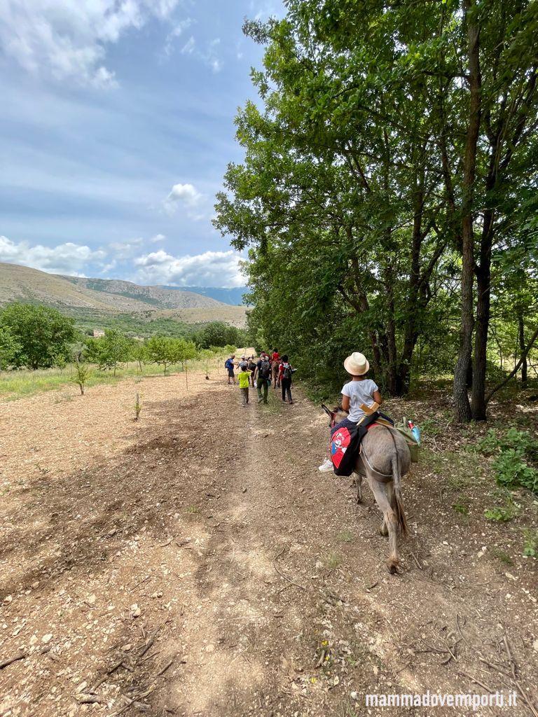 Trekking Asinelli alla Fattoria Valle Magica di Carapelle Calvisio