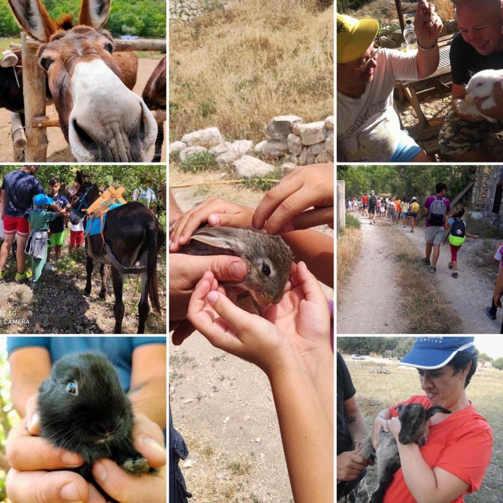 animali della fattoria valle magica